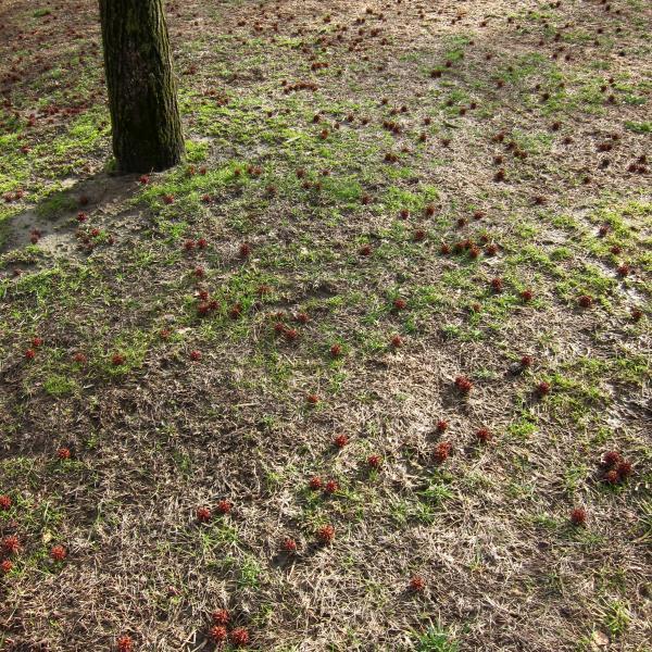 Gras, Baumsamen und das untere Ende eines Baumstamms