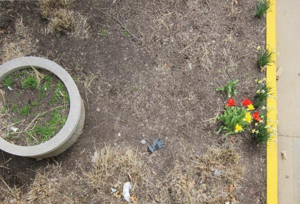 Ein Blumentrog mit Gras, ein verlorener Handschuh sowie Tulpen und Osterglocken