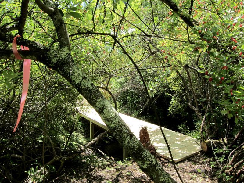 Ein Steg über einen Bach inmitten von Gestrüpp - sowie eine rosa Schlaufe und rote Beeren