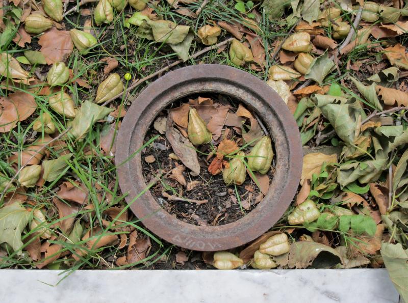 Laub, Samenkapseln und ein Loch im Boden